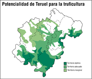 trufa teruel: