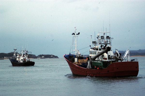 El gobierno cierra la pesquer a de la caballa para el for Ministerio de pesqueria