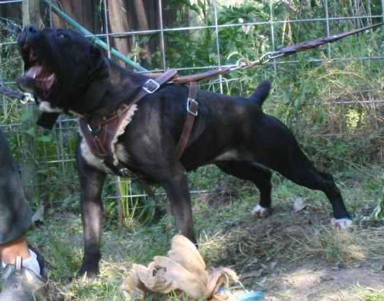 Where Can I Train My Dog To Guard