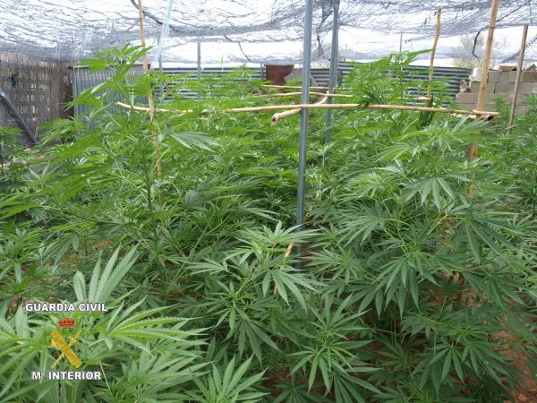 Detenidos siete hombres tras desmantelar dos plantaciones de marihuana con - Plantaciones de marihuana interior ...