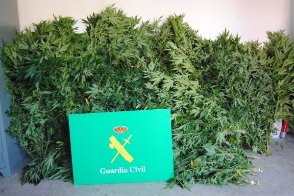 La guardia civil de burgos se incauta de 90 kilos de marihuana tras - Plantaciones de marihuana interior ...