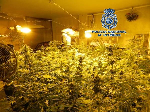 La polic a nacional desmantela dos plantaciones de marihuana en dos - Plantaciones de marihuana interior ...