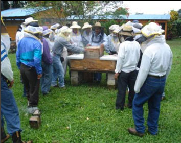 La abeja asesina en serie (africana) anida ya en nuestros árboles. Es muy agresiva